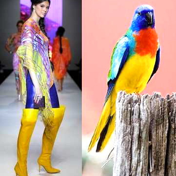 nature-inspired-fashion_bird-14