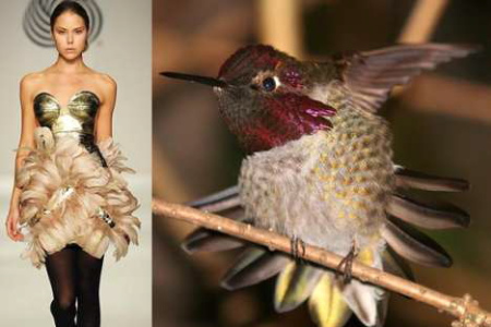nature-inspired-fashion_bird-2