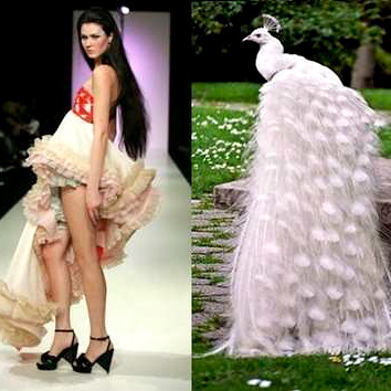 nature-inspired-fashion_bird-6