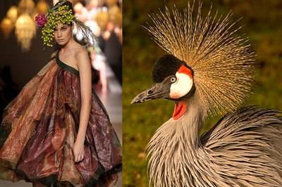 nature-inspired-fashion_bird-9