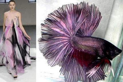 nature-inspired-fashion_fish-2