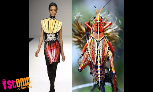 these_outfits_are_inspired_by_nature_unlike_strange_costumes-thumbnail