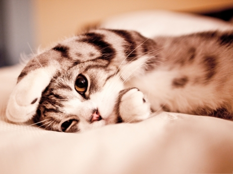 Funny-Cat-Picture-Lazy-Kitten-Lying-on-Bed-Can-t-be-Cutier