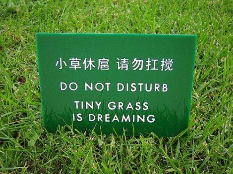 GrassDreaming