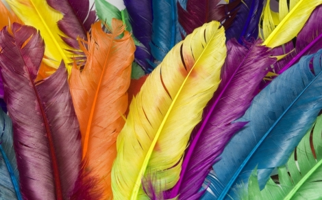 Rainbow-Feather-Colorful-HD-Wallpaper
