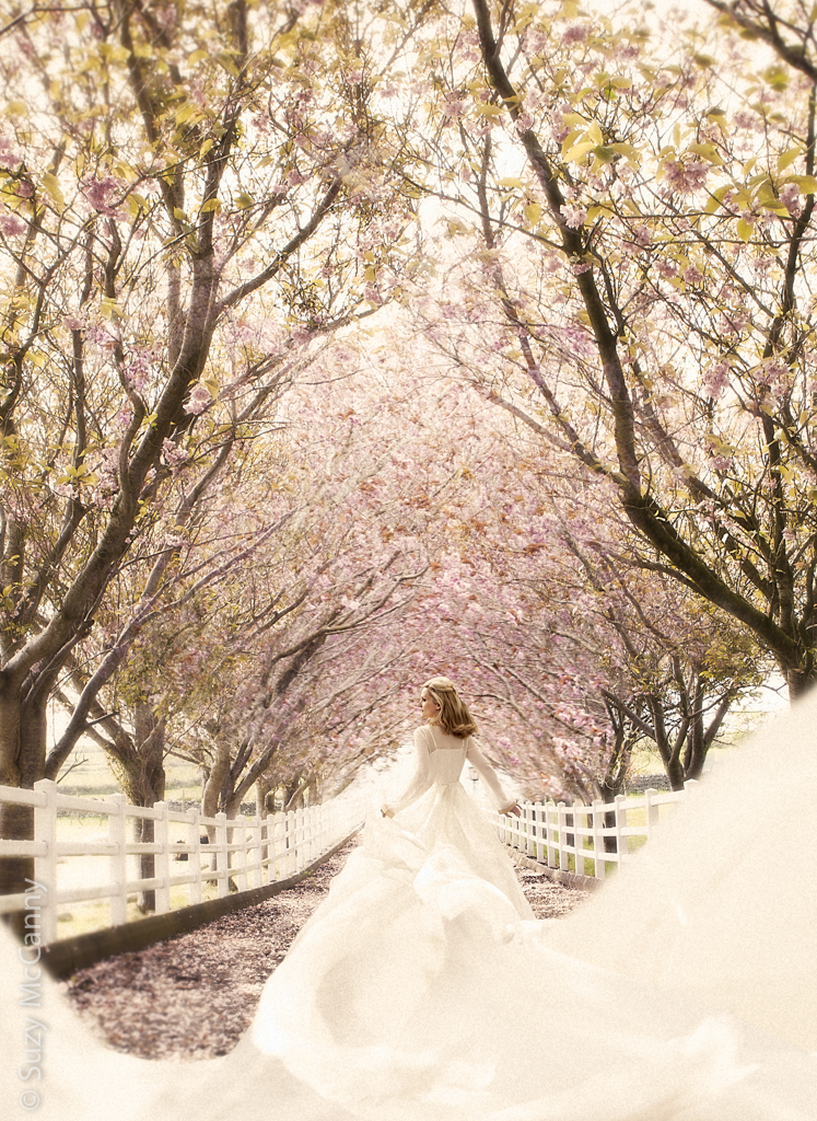Fine Art PhotographyIreland by Suzy McCanny Photography & Fashion-art-landscape-cherryblossom-cherry-blossom-water-refelction-trees